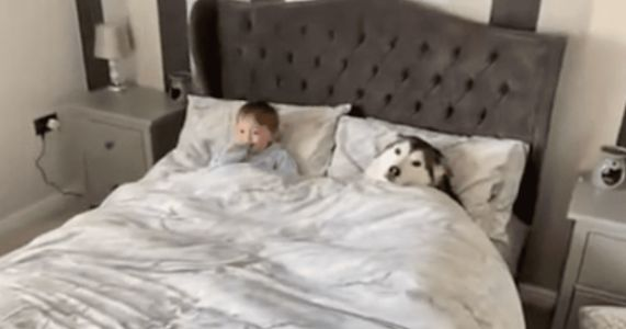 Dog Refuses To Get Out Of Bed, But Agrees To Share With Toddler