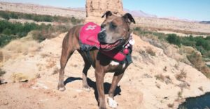 Anxious Pit Bull Finds Passion and Confidence Hiking with New Dad