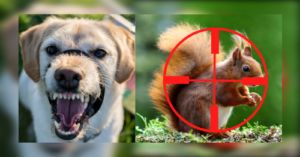 A Dog's Guide To Squirrel Warfare - Spring Is In The Air. The Chase Is On