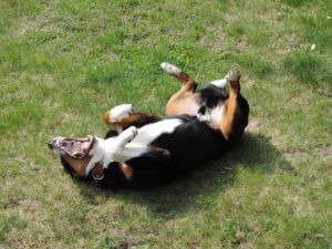 What Is An Umbilical Hernia In Dogs?
