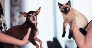 Study: Do Dogs Or Cats Make People Happiest?