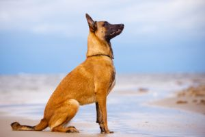 10 Dog Breed Names You're Probably Mispronouncing