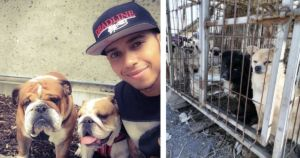 Racecar Driver Lewis Hamilton Wants Your Help Ending The Dog Meat Trade