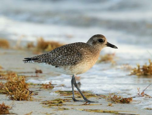 Best Time to Bird South Florida? Fall Migration