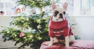 Bar Dog Wine Is Giving $1,000 And Vacation To The Dog With The Ugliest Sweater