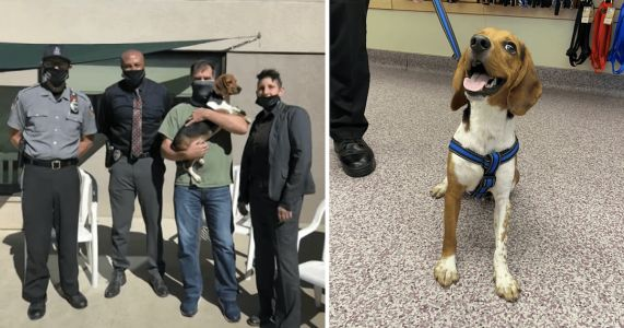 Homeless Beagle Puppy Becomes The World's Cutest Police Officer