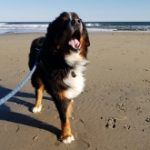 Hope for Dogs with Bone Cancer