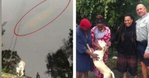 Dog Falls Into River & Is Kept Safe By A Helpful Sea Creature