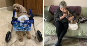 Paralyzed Puppy Mill Survivor Runs To Forever Home