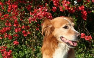 Can CBD Oil Help My Dog With Pain?