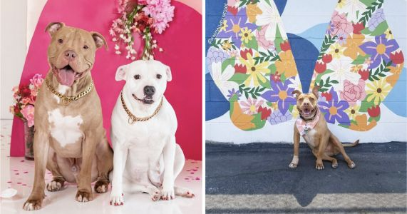 Pit Bulls Take Over Instagram To Reclaim Their Image