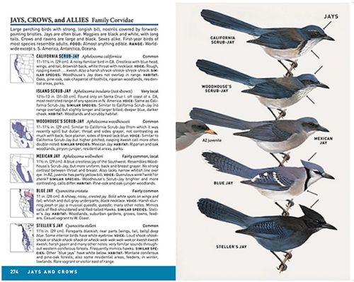 Peterson Field Guide to Birds of Western North America & Peterson Field Guide to Birds of Eastern and Central North America: A Field Guide Review