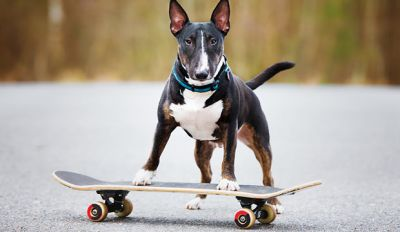 9 Awesome And Interesting Facts About Dogs