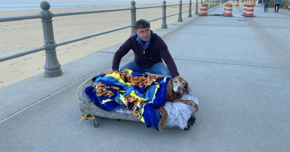 Family Creates Bed On Wheels For Elderly Dog's Adventures