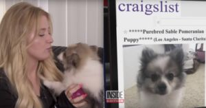 Man Sells His Ex-Girlfriend's Pomeranian On Craigslist