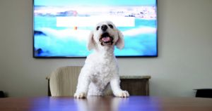 10 Reasons Why Your Dog Is The Best Coworker You've Ever Had