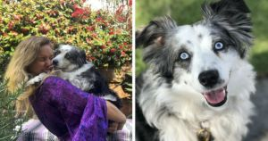 UPDATE: Dog Stolen 4 Months Ago Is Reunited With His Loving Mom