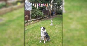 Collie Betrayed By Family Who Cleaned His Beloved Toys