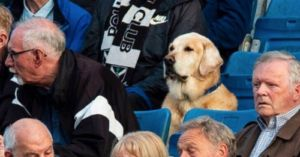 Canine Football Fan Charms The Internet With His Concentration