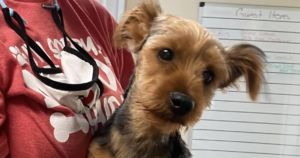 Stolen Puppy's Miraculous Return Home Made Possible Thanks To Social Media