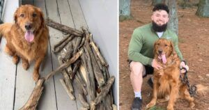 """""""Branch Manager"""" Bruce Brings Home A New Stick On Every Walk"""