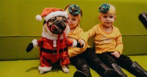 Doug The Pug Finds His Calling Helping Children Battle Cancer