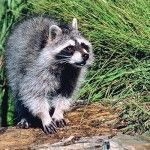 Wildlife camera project gives glimpse into natural world that goes unseen