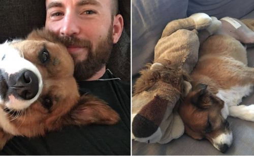 Chris Evans Sews His Dog's Favorite Toy As A Post-Surgery Surprise