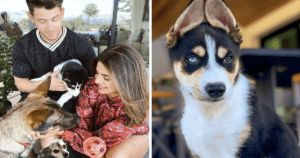 Nick Jonas And Priyanka Chopra's Rescue Pup Steals Their Instagram Fame