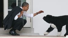 Barack Obama Announces Family's Beloved Dog Bo Has Died