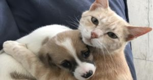 Cat Cares for Orphaned Litter of Puppies as if They're Her Own