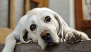 Does Your Dog Not Greet You Anymore When You Walk In? Read This