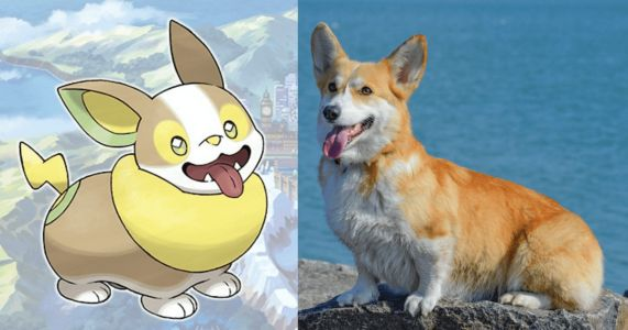 Dogs Vs. Cats: Pokemon So Cute You'll Wish They Were Real!