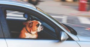 Soon You'll Be Able To Take An Uber With Your Dog Every Time