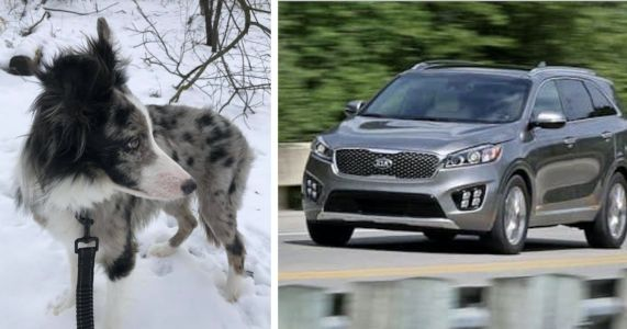Running Car Stolen From Hotel Parking Lot With Family Dog Inside