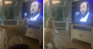 Dog Sings Emotional Duet Along With Opera On TV