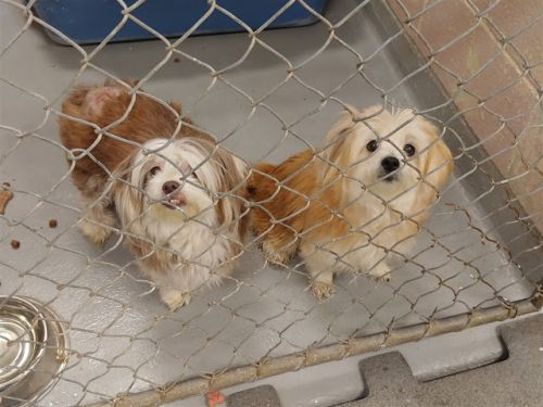 """""""CRIMSON"""" and """"CLOVER"""" small BONDED Pair seeks retirement home"""
