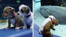Foster Puppies Take A Very Good Field Trip To A Closed Aquarium