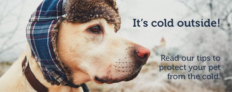 Cold Weather Alert: 11 Tips to Protect your Pets