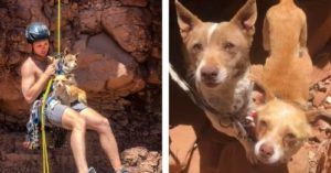 Man Rappels Into Canyon To Save Abandoned Dogs