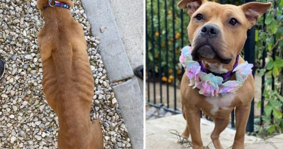 With Your Support, Paisley Went From Starving To Thriving