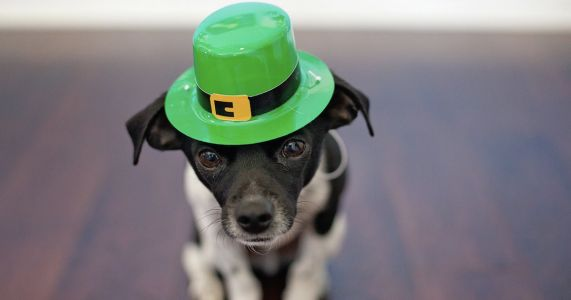 7 Irish Dog Breeds Who Feel Lucky This St. Patrick's Day