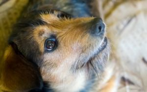 How To Help Your Newly Adopted Rescue Dog Settle In