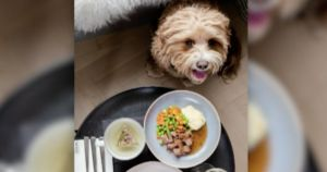 Hilton Thanks Supportive Dogs By Serving Luxury Dog Menus