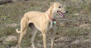 You Gave Donna The Greyhound The Diet She Needed To Thrive!