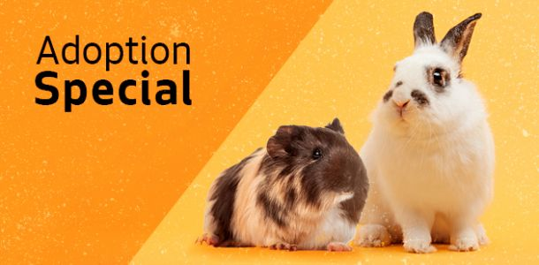 Hop over to Seattle Animal Shelter this weekend to adopt two bunnies or guinea pigs for the price of one