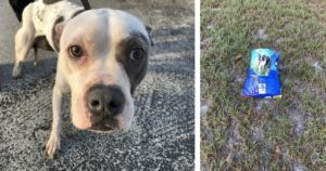 """""""Most Loving, Friendly"""" Pit Bull Dumped With Only A Bag Of Food"""
