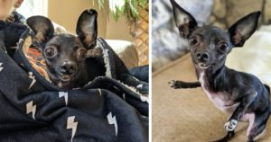 Dog Rescuer Finds Beauty And Happiness In Deformed Dog