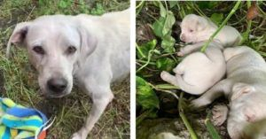 A Terrified Mama Tried To Find A Safe Place For Her Puppies