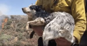 Man Reunited With Dog He Thought Died In Wildfire